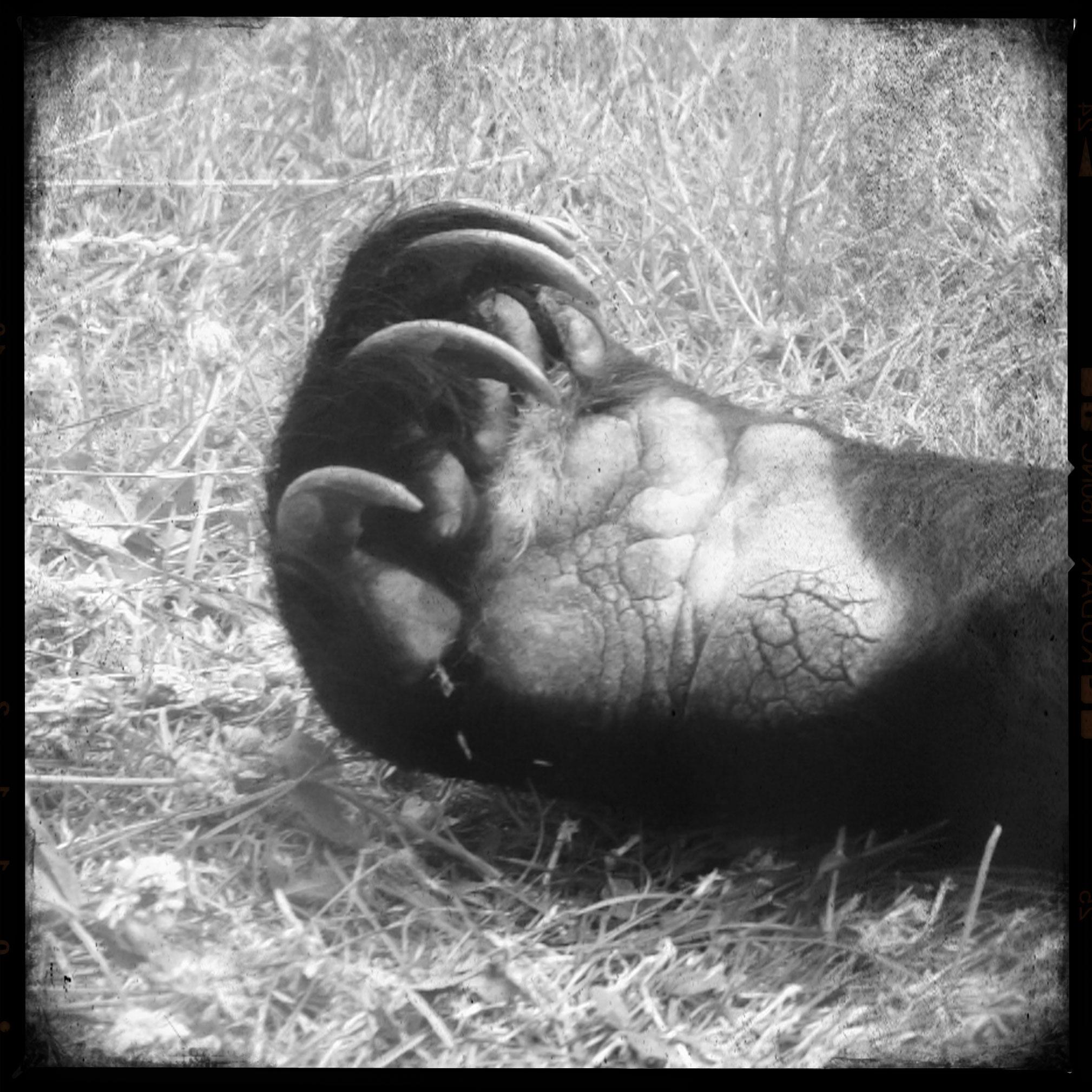 polyphaune-bear