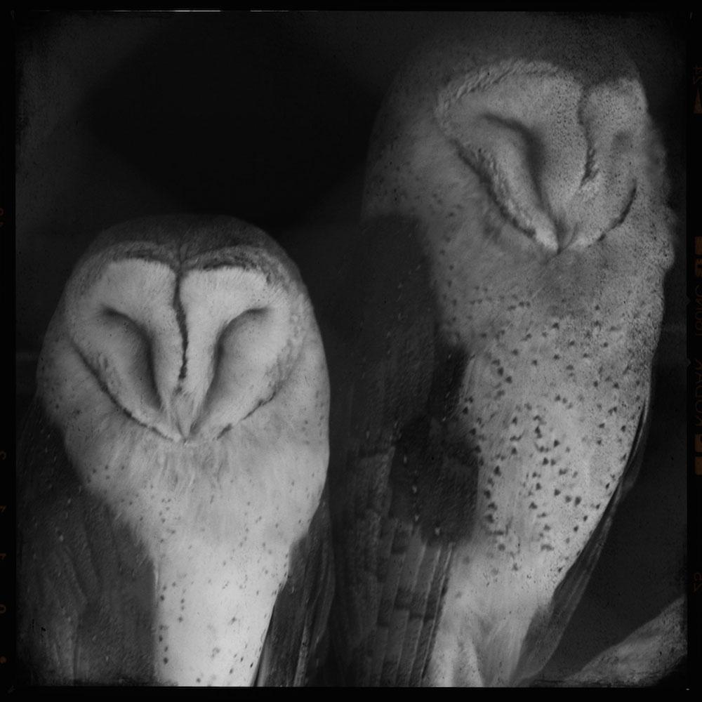 polyphaune-owls-1000