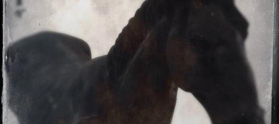 Polyphaune #16 : Ponyphaune