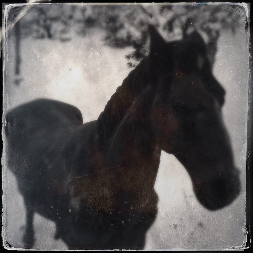 16-horse-1000